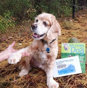 Train Daisy. Or Max. Or Scooter. We have books and DVD's to help you learn to be a better friend to your furry loved one!