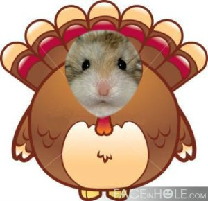 Gobble... Nose Wiggle...Gobble